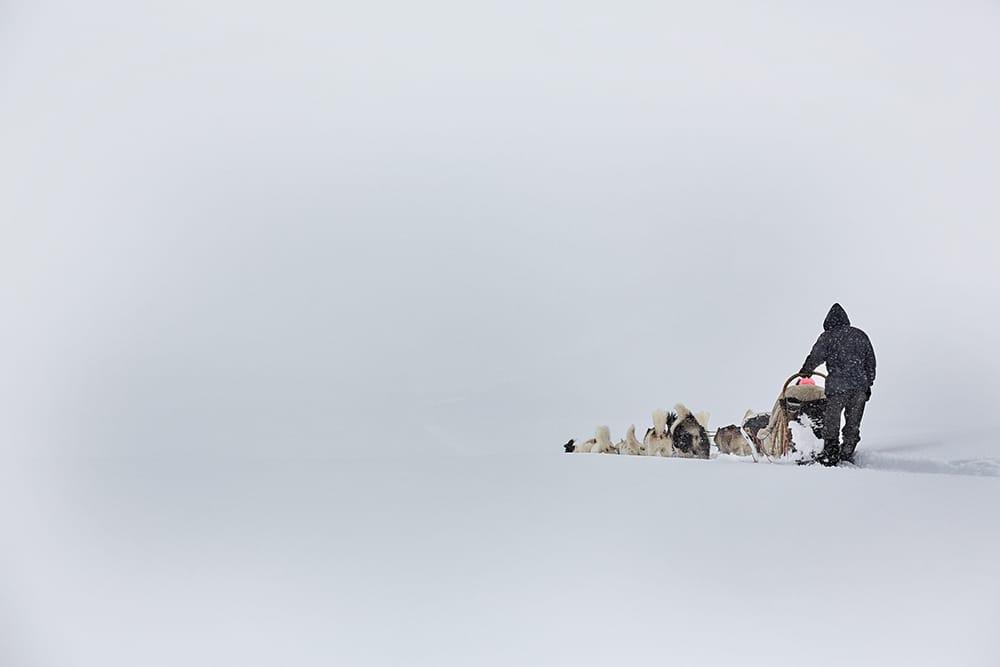 Chiens de traineaux - photographie sur les chiens de mushers de Jean-Pierre Collin