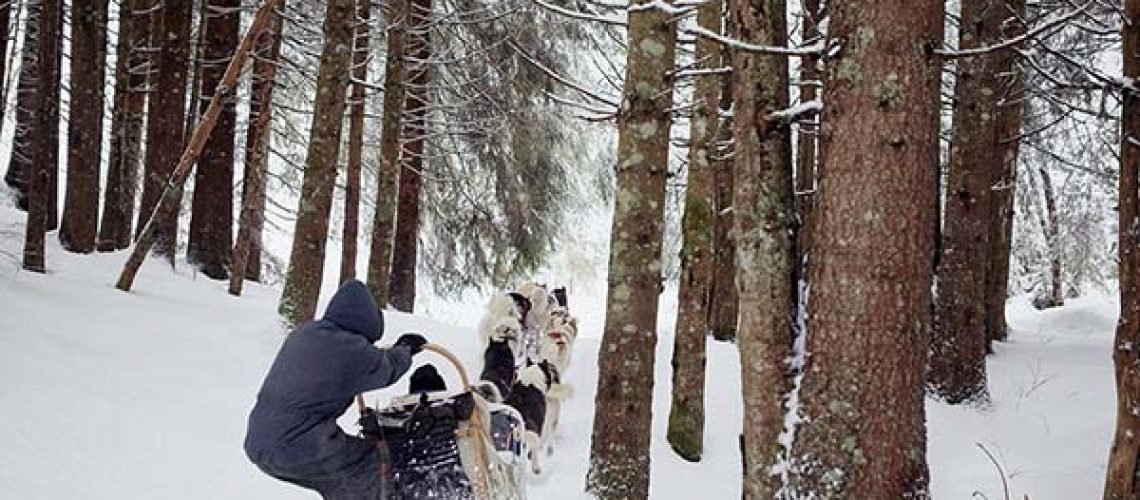 mushers-chiens-traineaux-collin-13